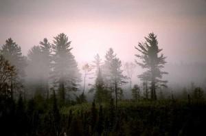 Understanding the Process of Grieving